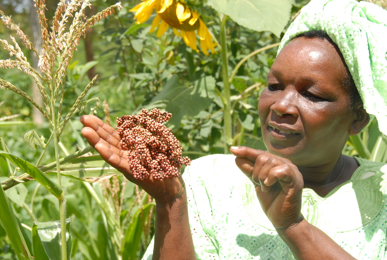 Photo of Kenyan woman with sorghum