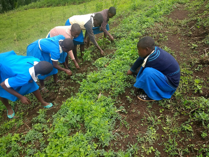 Children planting in a field